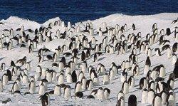 penguins community